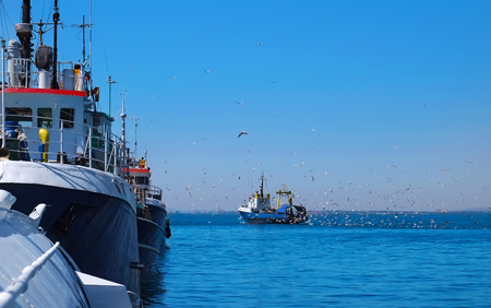 Flock of seagulls follow the fishing vessel in port. Stock Photo