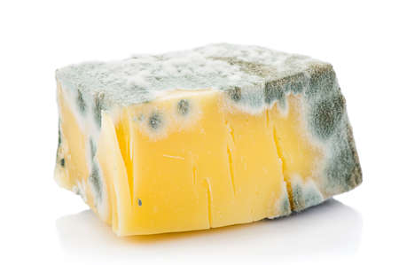 Piece of inedible mouldy cheese isolated on white background.