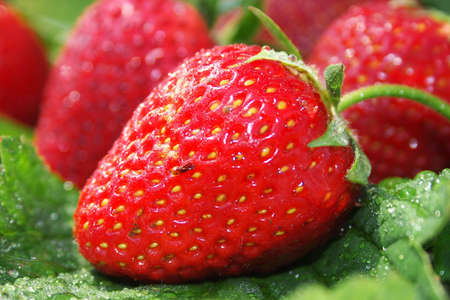 close range: A red strawberry served freshly taking a photo at a close range.