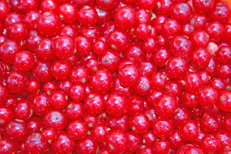 close range: Red currant picked freshly eyes taking a photo at a close range. Stock Photo