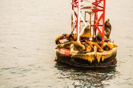 buoy: The Crowded Buoy Editorial