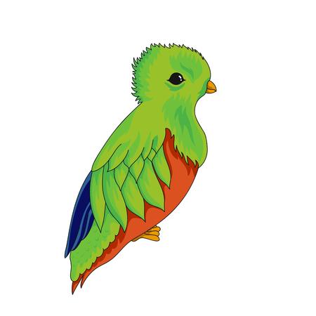 Icona di Pharomachrus mocinno. Uccello esotico dell'illustrazione di vettore del fumetto isolato su bianco