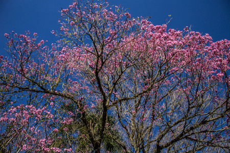 Tree with very beautiful pink flowers Stock Photo