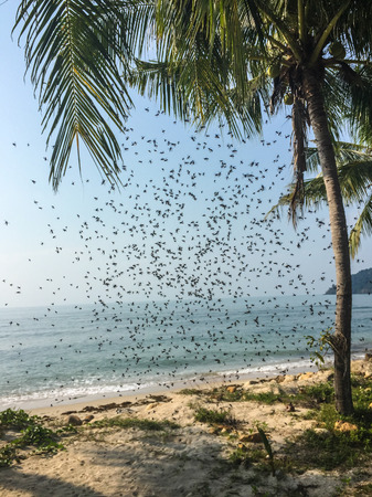 roy: Roy flies on the beach of Koh Chang Island in Thailand