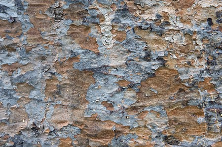 image of an old tree bark texture Stock Photo - 8013719