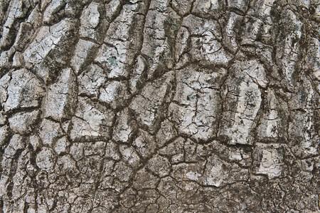 image of Nolina recurvata bark texture from Mexico Stock Photo - 8099741