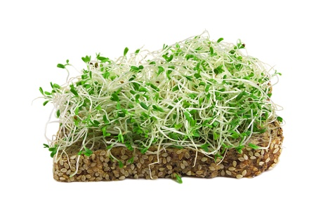 seedling: sandwich with alfalfa sprouts isolated on white
