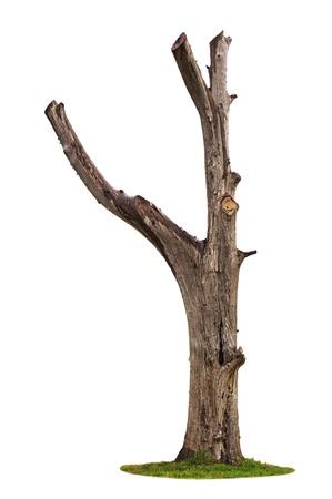 dead trees: Solo �rbol viejo y muerto aisladas sobre fondo blanco