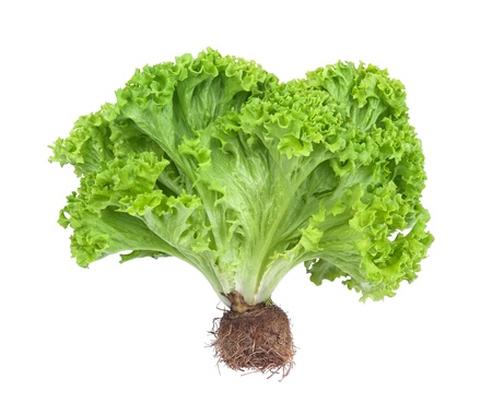 fresh and green lettuce isolated on white background  photo