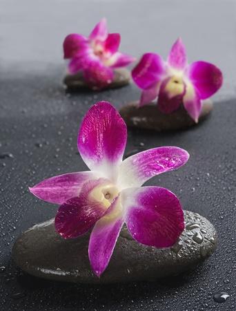 armonia: piedras zen con flores de las orqu�deas en blanco DOF background.Shallow Foto de archivo
