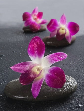 zen stones with orchid flowers on white background.Shallow DOF photo