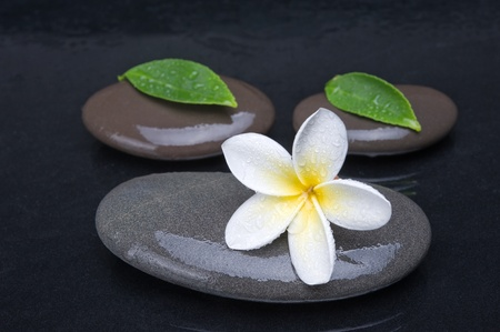 zen stones with frangipani flower on black  background photo