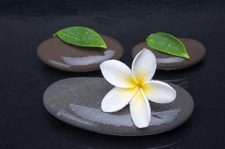 zen stones with frangipani flower on black  background photo