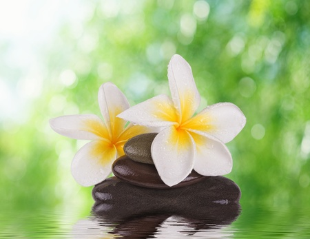 frangipanis: spa concept zen stones with frangipani flowers