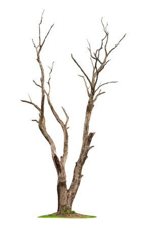 dead wood: Single old and dead tree isolated on white background