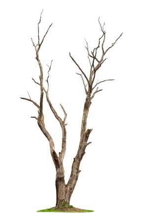 tree dead: Singolo albero vecchio e morto isolato su sfondo bianco