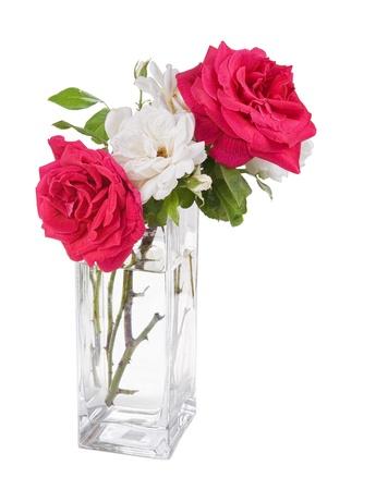 roses in vase: garden roses in the vase isolated on white  background
