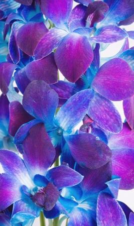背景としての深い紫色の蘭の枝
