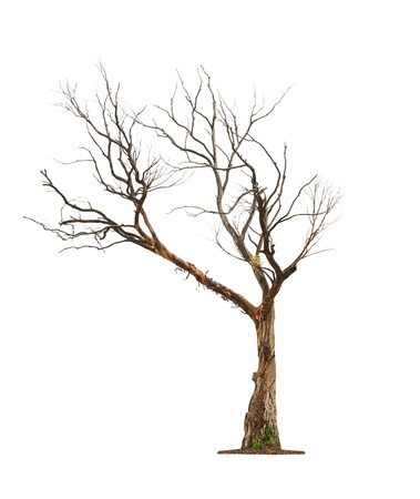 toter baum: Einzelne alte und toter Baum isoliert auf wei�em Hintergrund Lizenzfreie Bilder