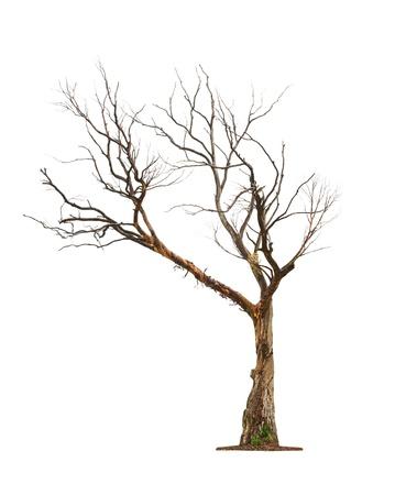Enkele oude en dode boom geïsoleerd op een witte achtergrond