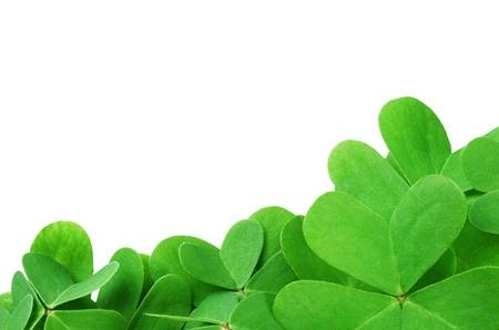 St. Patricks clover border isolated on white background  photo