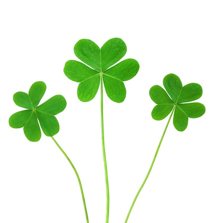 St. Patricks clover border isolated on white background  photo