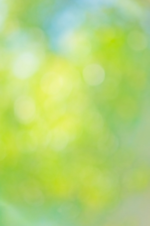 Beautiful summer or spring  abstract natural bokeh background  photo