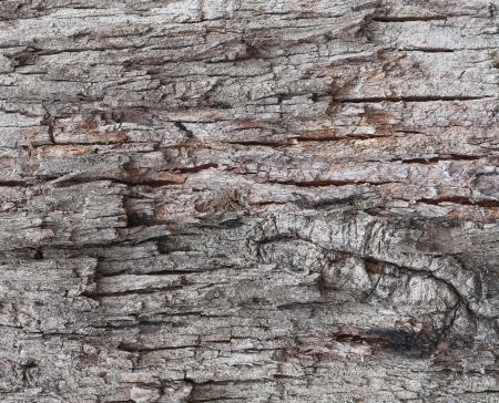 image of an old tree bark texture Stock Photo - 17620799