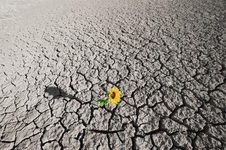 dode bladeren: droge grond van een onvruchtbaar land en single groeiende plant Stockfoto