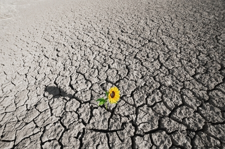 dry soil  of a barren land and single growing plant photo
