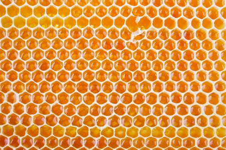 honey comb: fresh golden honeycomb shot from close range as a background Stock Photo