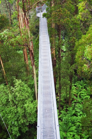 The steel walkway Otway Fly in the famous Rainforest up to 30 meters above ground level,Great Ocean Road, Australia photo