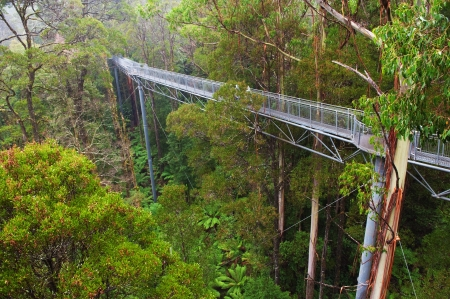 lofty: The steel walkway Otway Fly in the Rainforest up to 30 meters above ground level,Great Ocean Road, Australia
