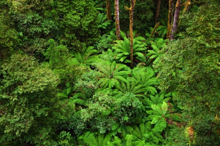 View Of The Rainforest Floor In Rain From The Tree Top Walk Of.. Stock  Photo, Picture And Royalty Free Image. Image 19581020.