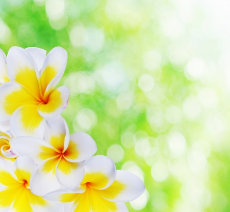 Beautiful summer natural bokeh background and frangipani in the corner photo