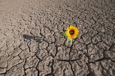 droge grond van een onvruchtbaar land en single groeiende plant Stockfoto
