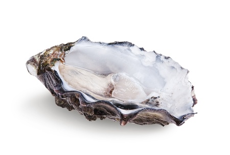 Fresh opened oyster isolated on white background photo