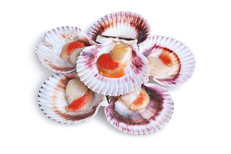 petoncle: une demi-douzaine frais coquille ouvert isolé sur fond blanc
