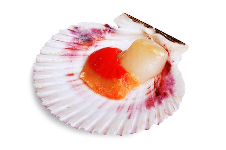 Fresh opened scallop shell isolated on white background photo