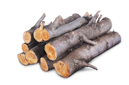 stack of firewood logs isolated on white background  写真素材