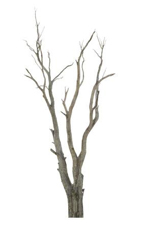 白い背景で隔離された単一の古い、死んだツリー 写真素材