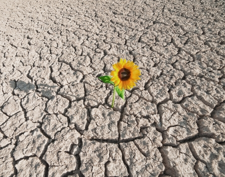 dehydrate: dry soil  of a barren land and single growing plant Stock Photo