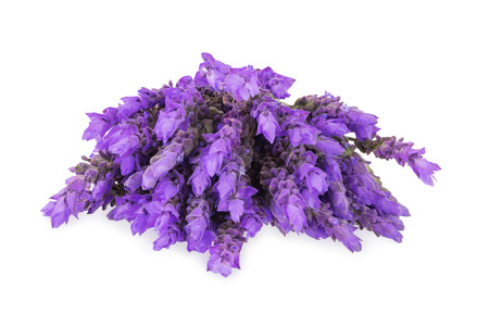 lavender: bundle of lavender flowers isolated on white background