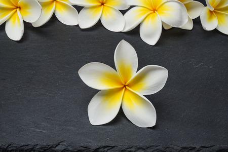 fragrant scents: White Frangipani plumeria Spa Flowers on  black stone slate background