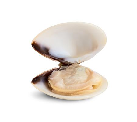 Fresh opened clam shell isolated on white background Stock Photo