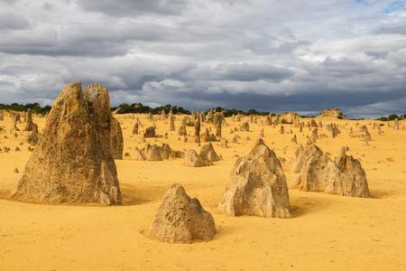 黄色の砂丘砂と石灰岩柱ピナクルズ砂漠ナンバング国立公園、西オーストラリア。