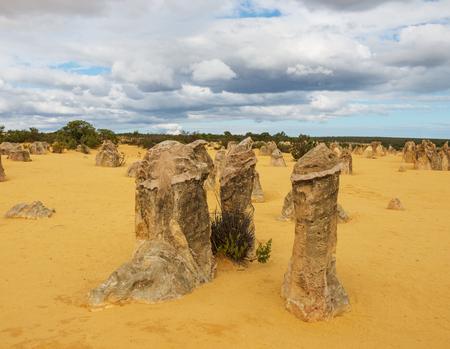 desert sand: Yellow sand dunes and  limestone  pillars  Pinnacles Desert in the Nambung National Park, Western Australia.