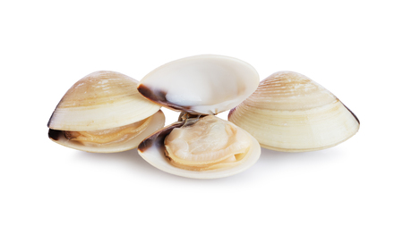 Three fresh opened and closed clams shell isolated on white background