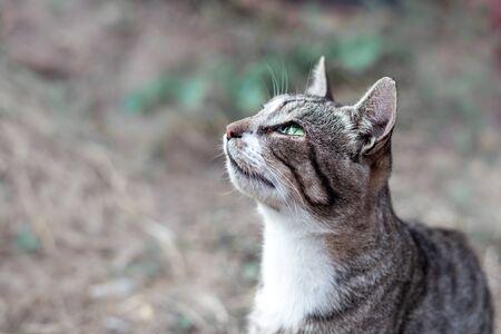 hungry gray striped stray cat Stock Photo