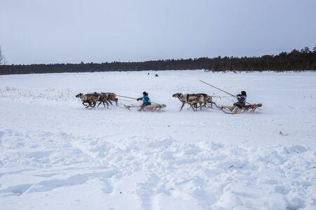Khans men ride in the snow on a sleigh pulled by deer on reindeer herding day Stock fotó